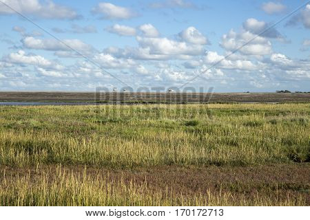 Maritime landscape with heathland blue sky and cloud Waddenzee Friesland The Netherlands