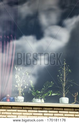close up on a window with plants and a dummy wooden human figurine model and cloud reflection
