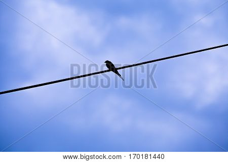 silhouette of a little swallow perched on a single electric wire with a dawn blue sky background