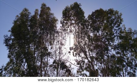 sky, trees and sun is beautiful vue of nature in winter of algeria