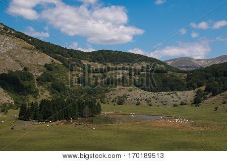 Apennines lake with wild livestock in Lazio, Italy