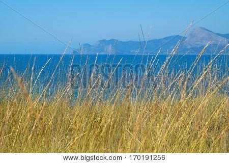 Black Sea Coast. Landscape texture background nature