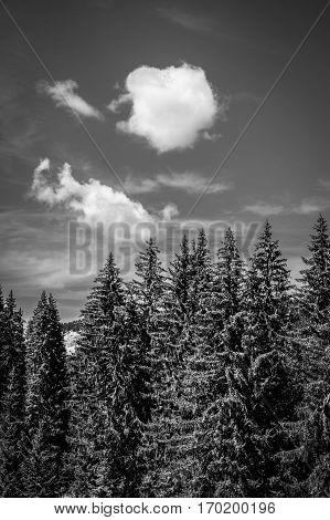 Black and white view of bucolic green summer alpine landscape Swiss Alps mountain massif canton du Valais Switzerland