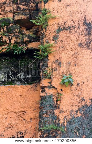 Background with Old brick wall and ivy