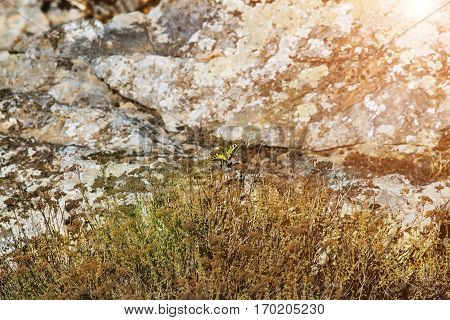 Butterfly On A Dry Grass