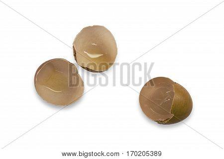 half egg shell opening isolated on white background