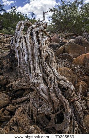 Outback Australia - River Bed