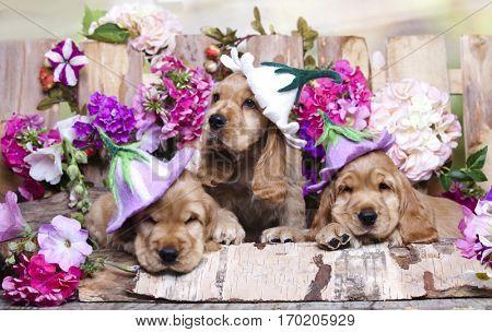 spaniel puppy in a hat flower