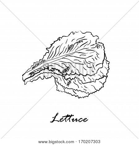 Hand drawn black vector illustration of lettuce isolated on white background