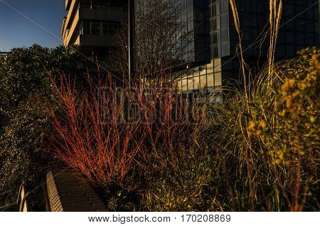 urban vegetation on the background of modern architecture