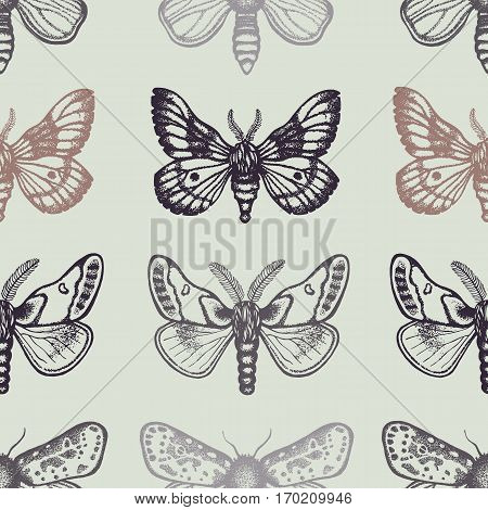 Seamless pattern with moths in retro style. Insects on a light background. Dotwork. Hand drawn.