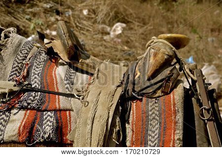Saddle and blanket on the back of a burro used for transportation