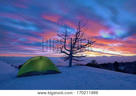 green tent and dead tree at dawn in winter Etna Park, Sicily