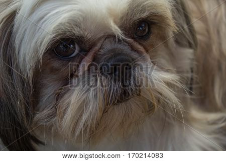 Photo of a long haired dog close up