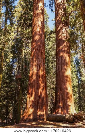 The Kings canyon and Sequoia national Park