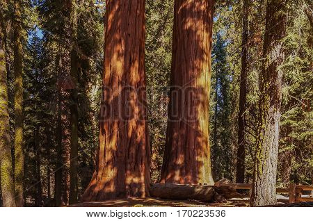 In The Kings canyon and Sequoia national Park