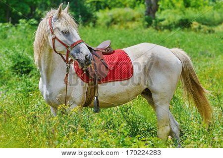 White Horse In Grass