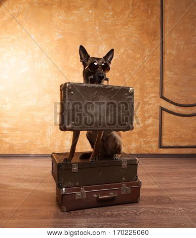 Happy dog traveler with cases in eyeglassess