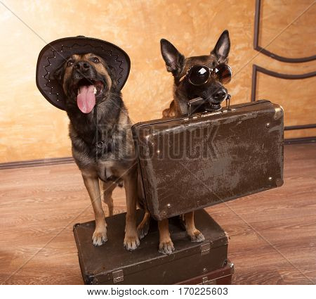 Two dog travelers with casees in eyeglasses