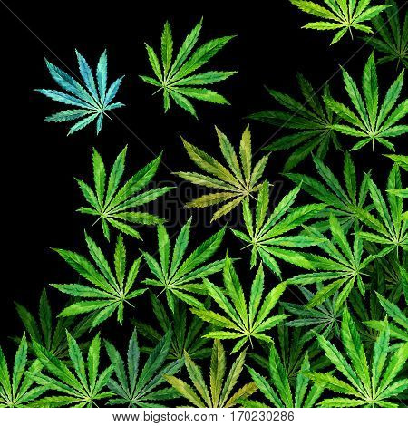 Crowd of Cannabis leaves on black background. Hand drawn watercolor illustration of the plant Cannabis Sativa or Marijuana. Pattern with marijuana leaf for label poster web.