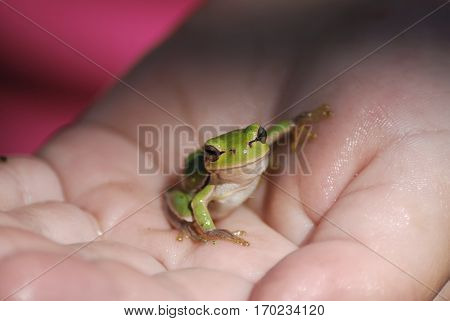 little and green frog on the hand