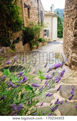 Mediterranean rural alleyway with lavender plant in the foreground