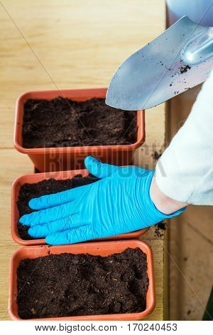 The Woman In The Blue Gloves, Compacts The Soil In A Pot