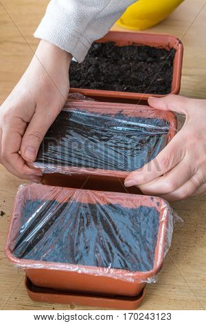 The Woman Closes With Plastic Wrap Pots With Planted Seeds