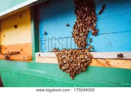 Swarm of bees fly to beehive. Beauty world