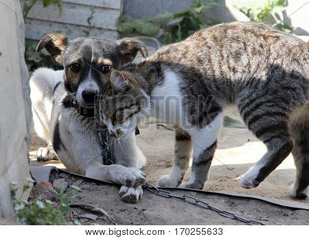 Dog and cat together on the street