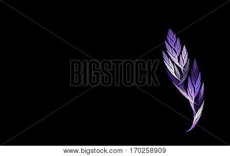 violet fractal leaf on a black background