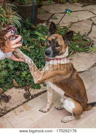 Dog offering his paw  to his owner, who's holding a dog toy