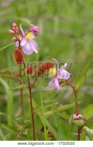 Jungle Flower 2