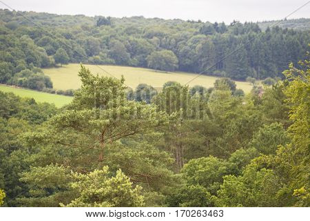 Overview of a Hill Country with woods of Scotch Pine (Pinus sylvestris)