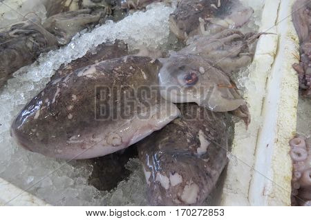 Cuttlefish (Krake) from Adriatic sea in the fish market in Bar-city, Montenegro.