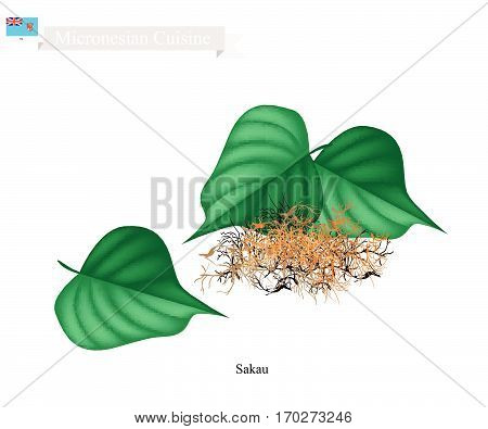 Micronesian Plant Illustration of Sakau Kava or Piper Methysticum Plant The Roots of The Sakau Plant Mixed with Water to Produce A Drink. One of The Most Popular Plant in Micronesia.