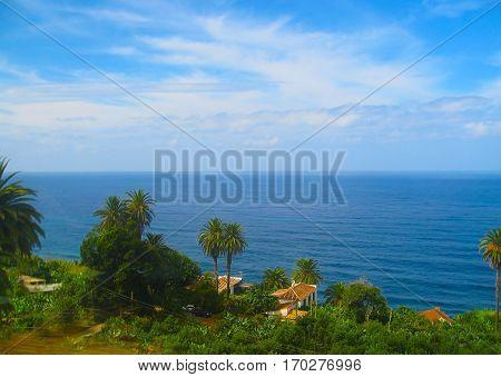 Beautiful coast of Tenerife palm tree Canary Islands Spain