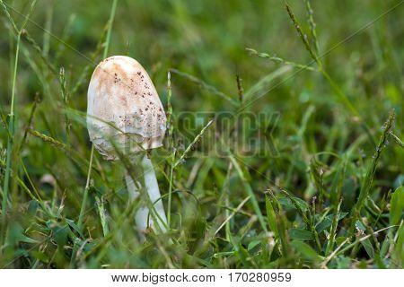 a fresh mushroom after rains in deep woods