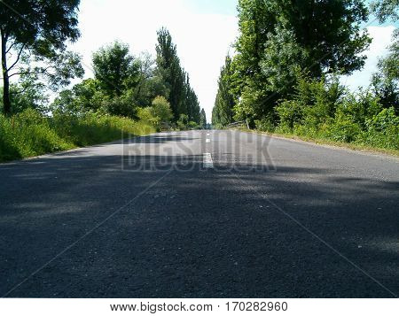Photo of a road surrounded by greenery
