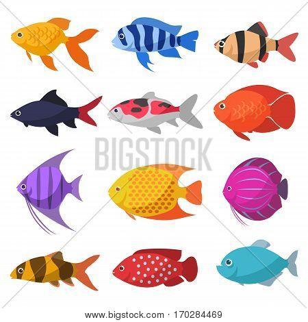 Isolated river fish. Set of freshwater aquarium cartoon fishes. varieties of ornamental popular color fish. Flat design fish. Cartoon vector design illustration.