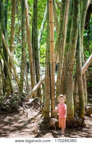 Boy at bamboo tree at botanical garden. Mauritius