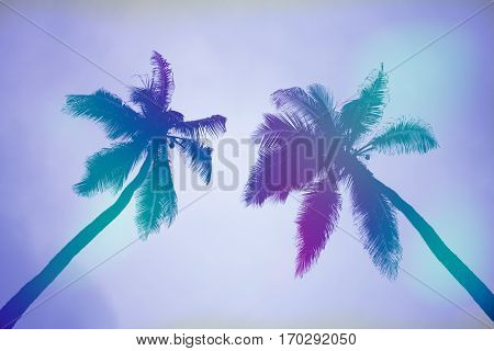 Palm Palm And Calm Down In The Beach