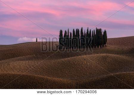 Italy. Tuscany. Cipressi di San Quirico d'Orcia