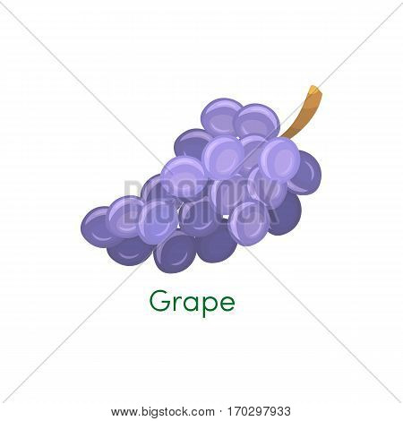 Blue wet isabella wine grapes bunch isolated on white background. Design element for app game or UI website. Grapes fruit in flat style. Vector object