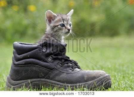 Little Cat And Black Brogue