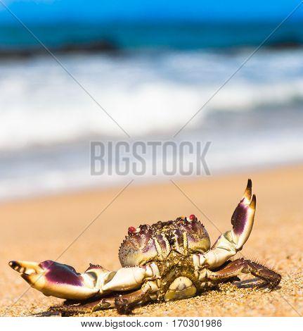 Funny Crab Pure Threat