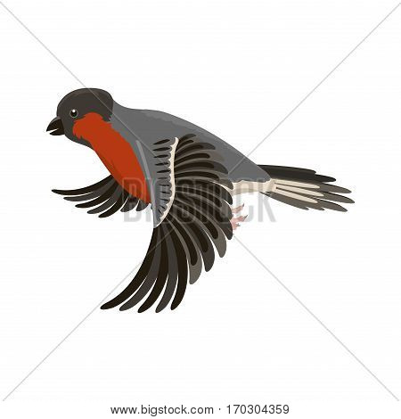Bullfinch colorful nature winter bird vector illustration. Cartoon cute fauna feather flight animal silhouette. Spring freedom natural concept. Wildlife drawing isolated pet.