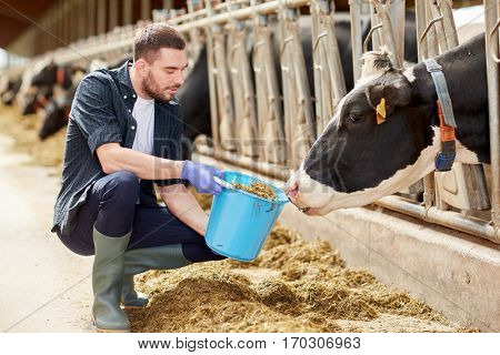 agriculture industry, farming, people and animal husbandry concept - young man or farmer with cows and bucket in cowshed on dairy farm