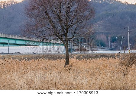 Isolated tree without leaves in a meadow of tall grass with the top of a green house and wooded area in the background