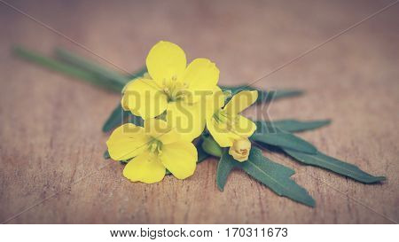 Fresh arugula or rucola leaves with flowers on wooden surface